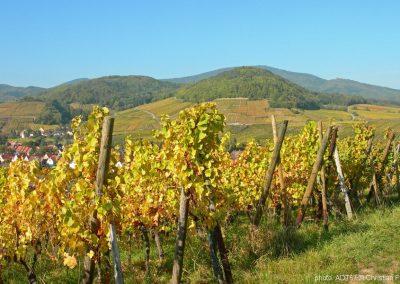 Andlau Route des vins © c. fleith